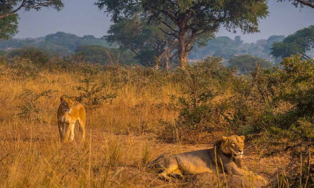 3 days Murchison falls National Park Safari