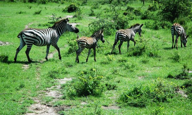 12 Days Primates and Wildlife Safari